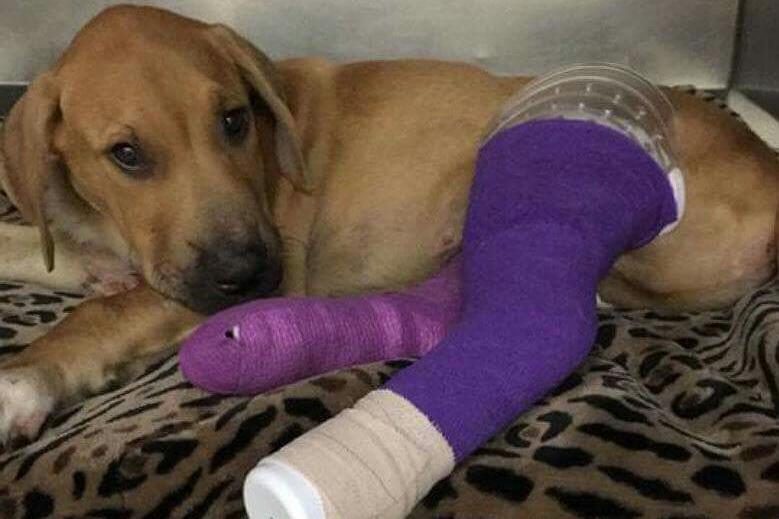Poké-Walk Results In Cute Pup Rescue